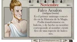 Falco Aesalon – Mago del Mes Noviembre