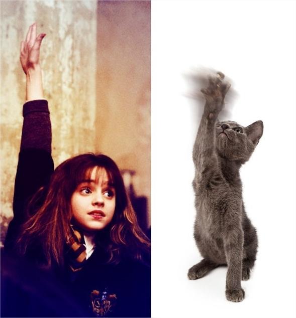 Harry Potter BlogHogwarts Gatos (1)