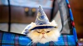 17 Personajes de Harry Potter que podrían ser Gatos!