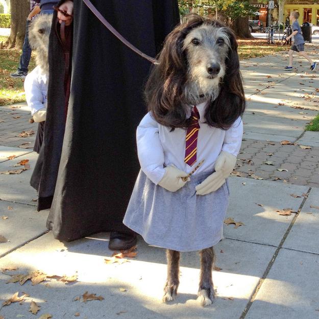 hermione granger perro