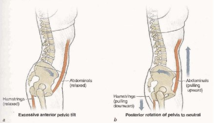 Pilates Anatomy p.41