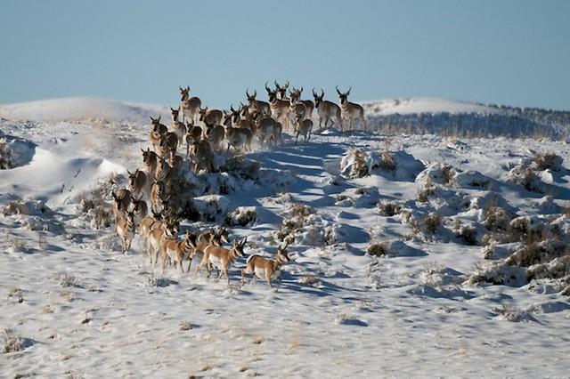 Grandes migrações de animais 12