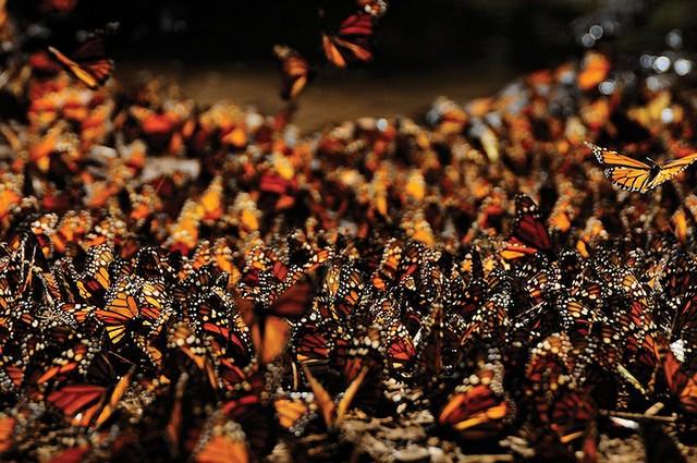 Grandes migrações de animais 14
