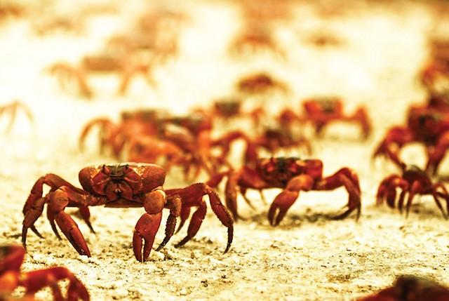 Grandes migrações de animais 15
