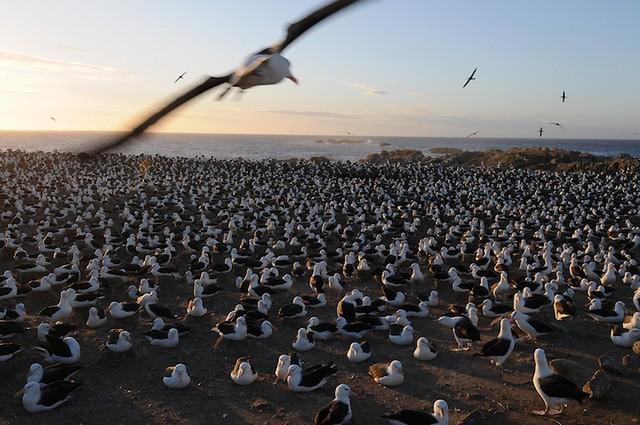Grandes migrações de animais 16