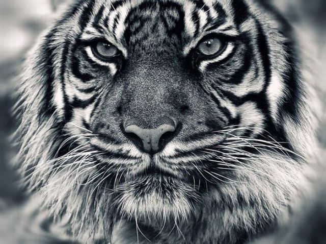 Fotos incríveis de predadores da natureza