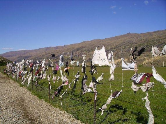 Cerca lotada de sutiãs pendurados na Nova Zelândia