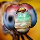 close_olhos_insetos