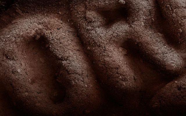 Fotos de alimentos no microscópio