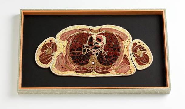 A anatomia humana dissecada em papel japonês
