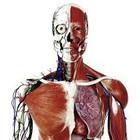 corpo_humano_2