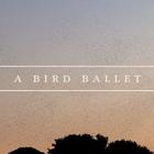 bird_ballet
