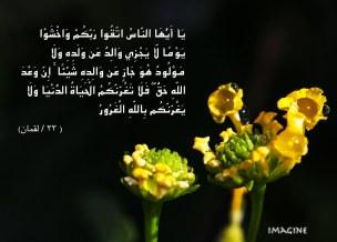 IMG_9850 copy