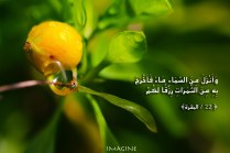 IMG_9854 copy