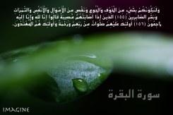 IMG_9993