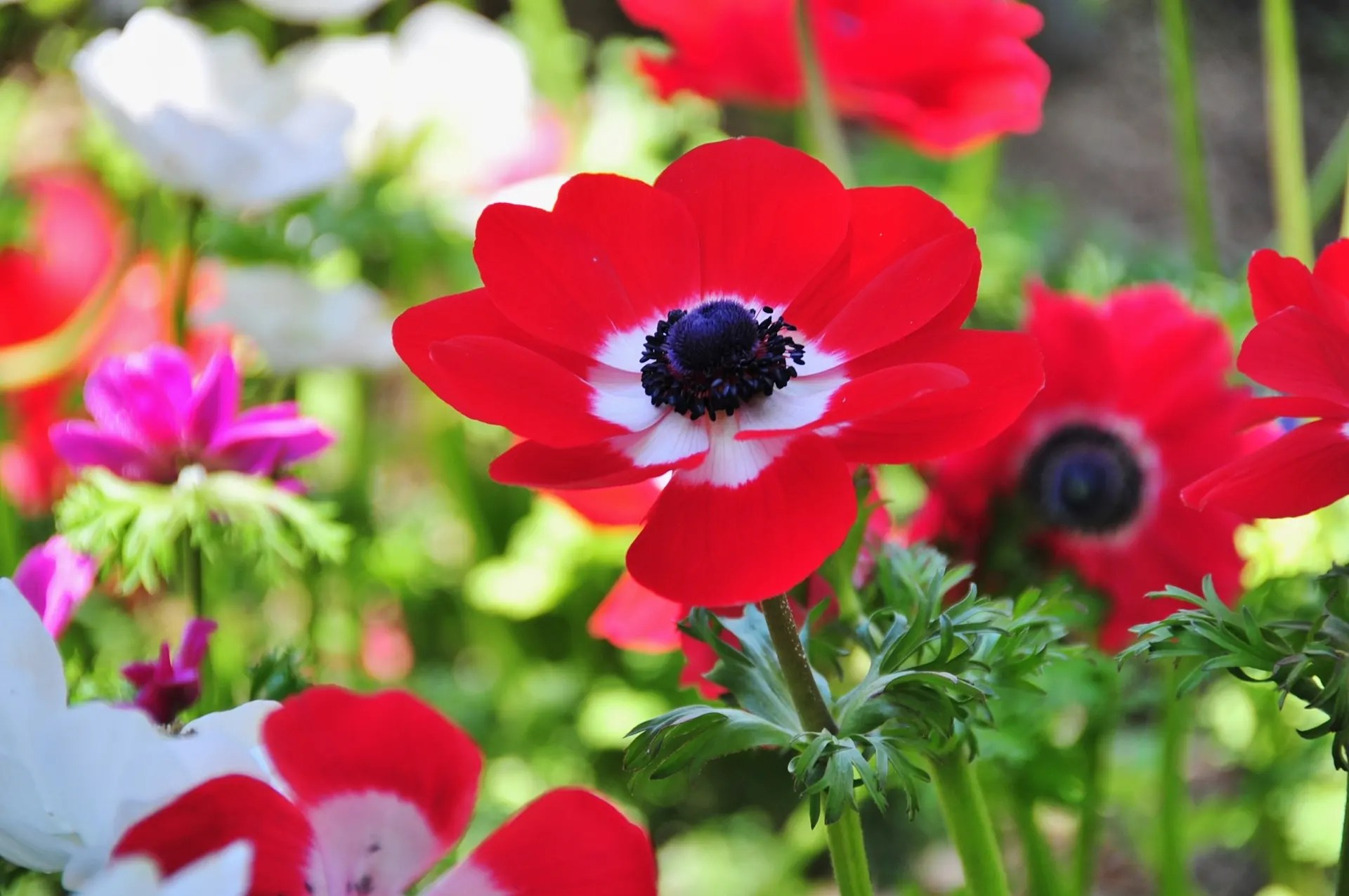過去の寫真~5月の花風景 - 綺麗な寫真 日々出來事