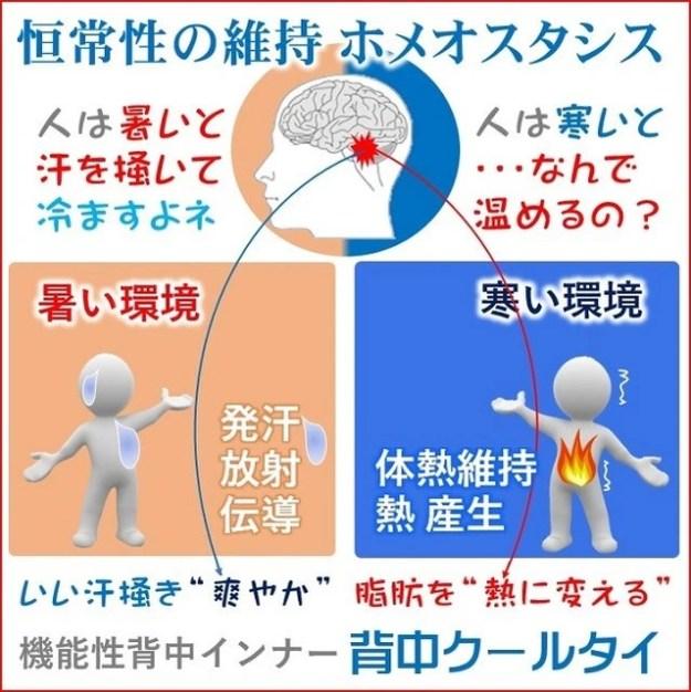 恒常性の維持ホメオスタシス暑いと汗を掻き寒いと脂肪を熱に変える