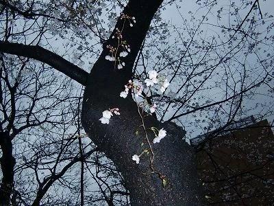 幹から幼い枝も生えてきていて、まだまだ生命力はありそうです。