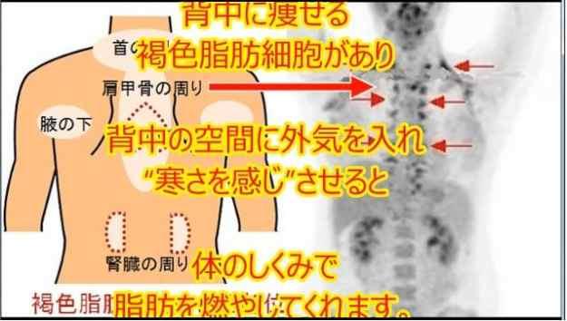 褐色脂肪細胞を寒冷刺激する「背中クールタイ」