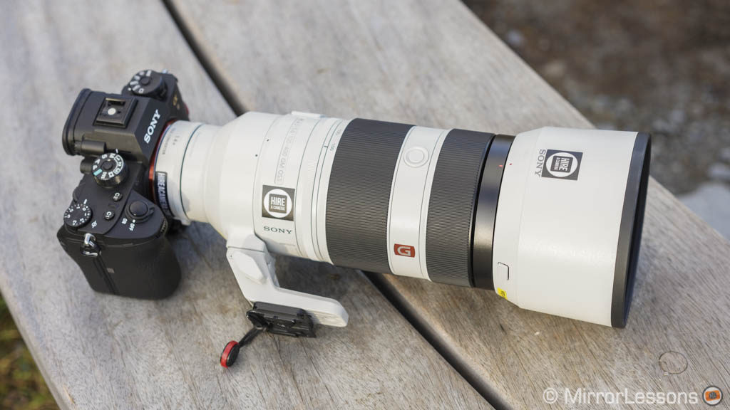 300mm prime or longer zoom lens for wildlife photography? - BlogInstall