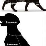 Cat Petting vs. Dog Petting