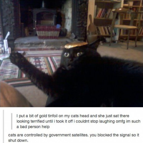 """II put a bit of gold tinfoil on my cats head and she just sat there looking terrified until I took it off I couldn't stop laughing omfg i'm such a bad person help"" ""Cats are controlled by Goverment satellites. You blocked the signal so it shut down."""