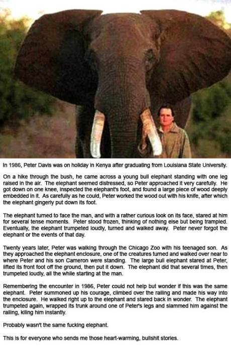 In 1986, Peter Davis was on holiday in Kenya after graduating from Louisiana State University.  On a hike through the bush, he came across a young bull elephant standing with one leg raised in the air.  The elephant seemed distressed, so Peter approached it very carefully.  He got down on one knee, inspected the elephant's foot, and found a large piece of wood deeply embedded in it.  As carefully as he could, Peter worked the wood out with his knife, after which the elephant gingerly put down its foot.  The elephant turned to face the man, and with a rather curious look on its face, stared at him for several tense moments.  Peter stood frozen, thinking of nothing else but being trampled.  Eventually, the elephant trumpeted loudly, turned and walked away.  Peter never forgot the elephant or the events of that day.  Twenty years later, Peter was walking through the Chicago Zoo with his teenaged son.  As they approached the elephant enclosure, one of the creatures turned and walked over near to where Peter and his son Cameron were standing.  The large bull elephant stared at Peter, lifted its front foot off the ground, then put it down.  The elephant did that several times, then trumpeted loudly, all the while starting at the man.  Remembering the encounter in 1986, Peter could not help but wonder if this was the same elephant.  Peter summoned up his courage, climbed over the railing and made his way into the enclosure.  He walked right up to the elephant and stared back in wonder.  The elephant trumpeted again, wrapped its trunk around one of Peter's legs and slammed him against the railing, kiling him instantly.  Probably wasn't the same fucking elephant.  This is for everyone who sends me those heart-warming, bullshit stories.