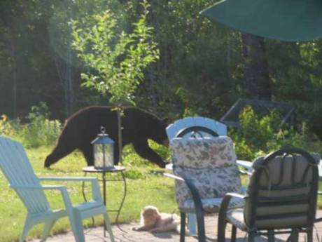 Multiple Bear Sightings Near Downtown Knoxville