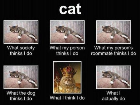 "Cat: ""What society thinks I do."" ""What my person thinks I do."" ""What my person's roommate thinks I do.""  ""What the dog thinks I do."" ""What I think I do."" ""What I actually do."""