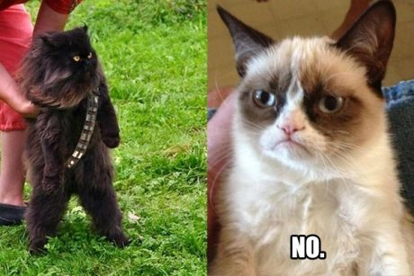 """Mewbacca & Grumpy Cat: """"NO."""""""