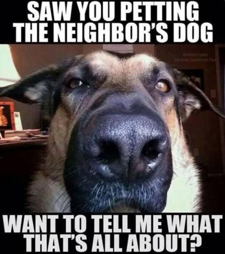 Saw You Petting the Neighbor's Dog. Want to Tell Me What That's All About?