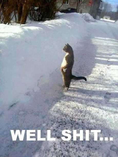 """Cat in Snow: """"Well, Shit!"""""""