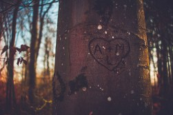 Eternal love carved into tree. - Photo: wikimedia