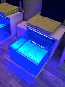 l'aquarium du délit !