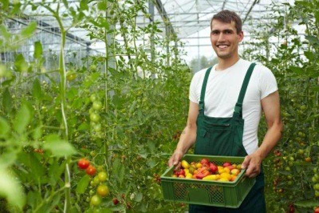 9401625-happy-agriculteur-biologique-transportant-des-tomates-en-serre