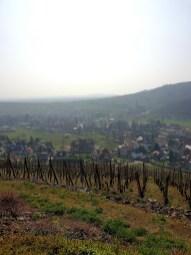 Le Kastelberg hôtel restaurant Andlau Alsace route des vins vignes
