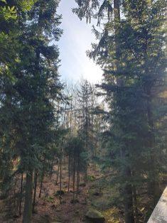 Baumwipfelpfad Sentier des cimes Bad Wilbad foret noire Allemagne