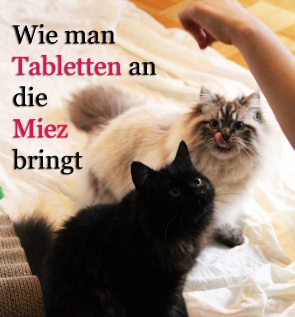 Blogkatzen-Tablettenverabreichung