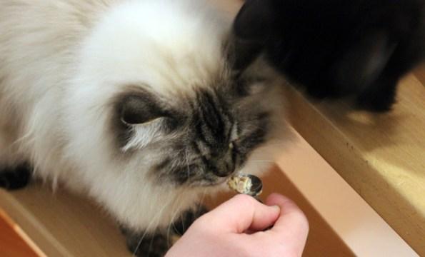 Katzenleckerchen- naschen erlaubt