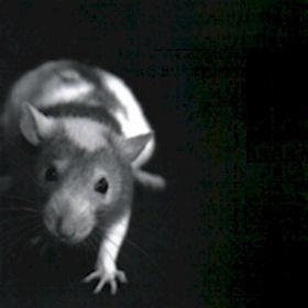 Frank Critelli - A Rat's Dose (2008)