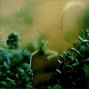 Steely Dan - Katy Lied (1975)