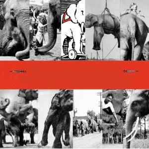 10,000 Maniacs - Blind Man's Zoo (1989)