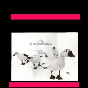 It Dockumer Lokaeltsje - Wil met u neuken! (1987)