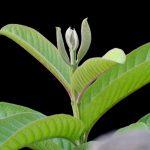 Ezzel a növény segíthet eltüntetni a ráncaidat, bőrproblémáidat