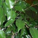 Jól mutatnak, de veszélyesek lehetnek az egészségedre! 5 kerülendő növény!