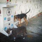 Különleges ételadagolók segítenek a kóbor kutyákon