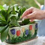 Tudtad, hogy az élesztőtől sokkal gyorsabban nőnek a szobanövények? Így kell használni!