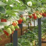 5 különleges módszer, amivel a legkisebb helyen is nevelhetsz epret!