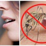 Közeledik a nyár, ezzel az egyszerű vitaminnal elkerülhetjük a szúnyogcsípéseket!