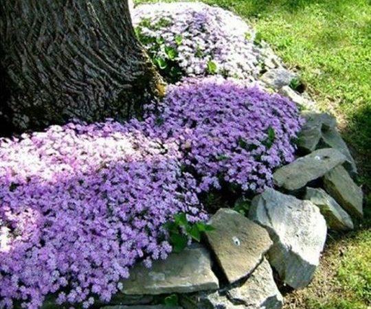 viragok-amelyek-szeretik-az-arnyekot2-540x450
